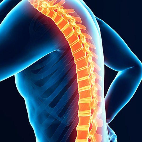 Spine highlighted in orange