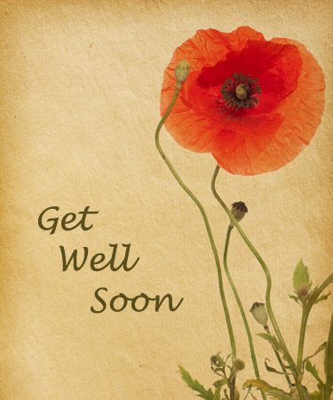 Get Well soon poppy flower
