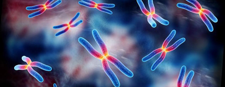 Genetics and Developmental Biology