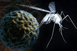Adult female mosquito with a high power view of the West Nile Virus in the background