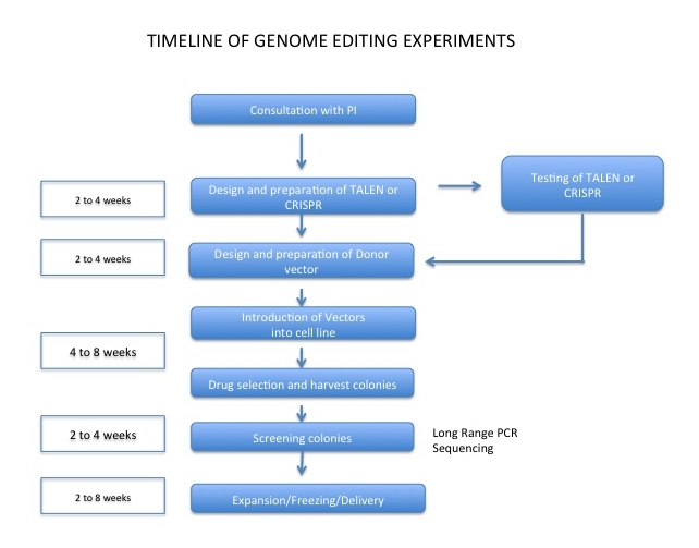 Timeline of genome editing experiments
