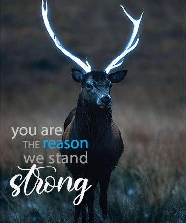 You Are the Reason We Stand Strong and deer with antlers eCard