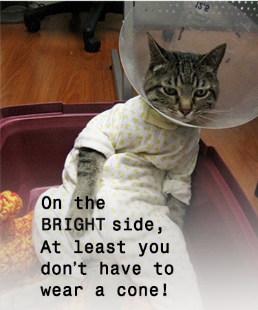 On the Bright Side, at least you don't have to wear a cone and cat with cone eCard