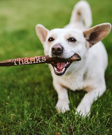 Thanks and White dog running with sick in mouth eCard