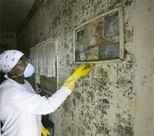 Cleaning mold from a wall