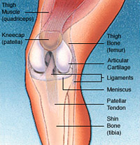 Total Joint Replacement Conditions and Treatments Total Knee Replacement, Figure 2