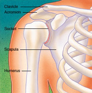 Shoulder Surgery, Figure 1