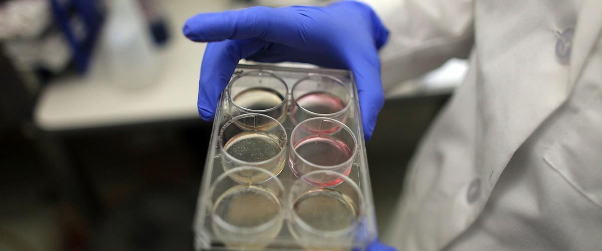 Laboratory petri dish