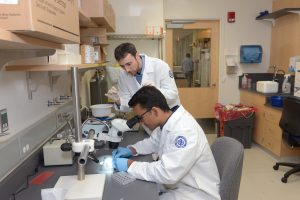 Rohit Makol '20 (ENG), seated, works with David Martinelli, assistant professor of neuroscience