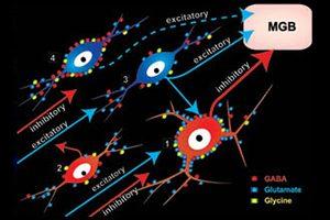 Neurobiology of Hearing illustration