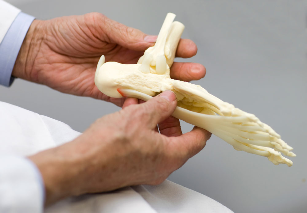 Doctor with a foot model
