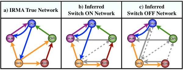 Figure Comparison between the true IRMA network and the networks inferred by our algorithm