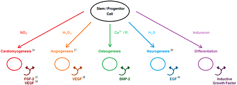 Figure was adapted from Cushnie EK, Ulery BD, Nelson SJ, Deng M, et al. (2014) Simple Signaling Molecules for Inductive Bone Regenerative Engineering.