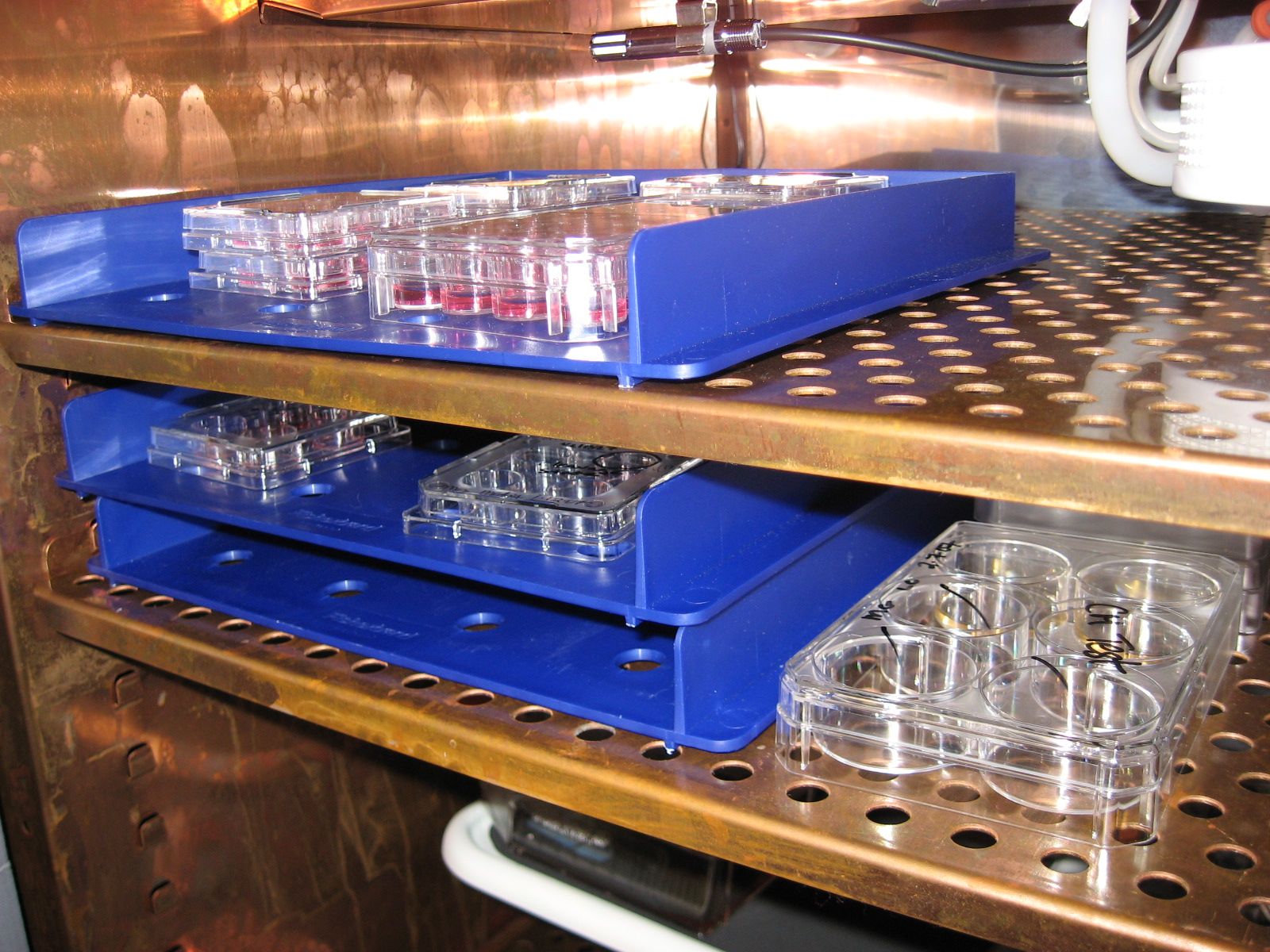 Stacks of plates containing stem cells in a cell culture incubator