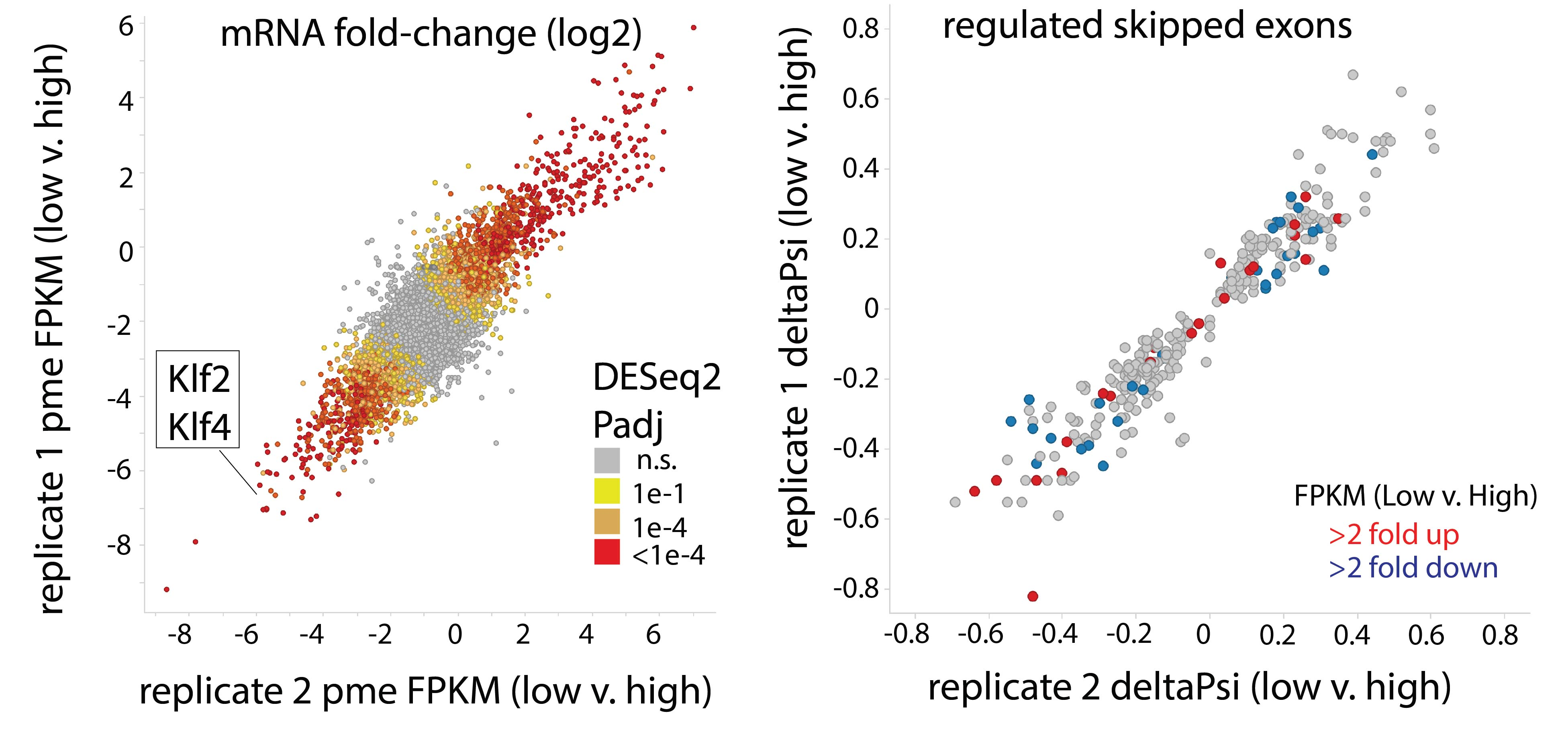 RNA splicing event regulated by disturbed flow across the endothelium