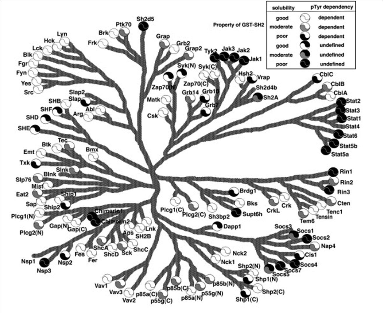 Mechanism of tyrosine kinase signaling